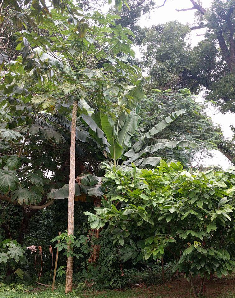 TWWB architect Agroforestry Cote d'Ivoire location_750